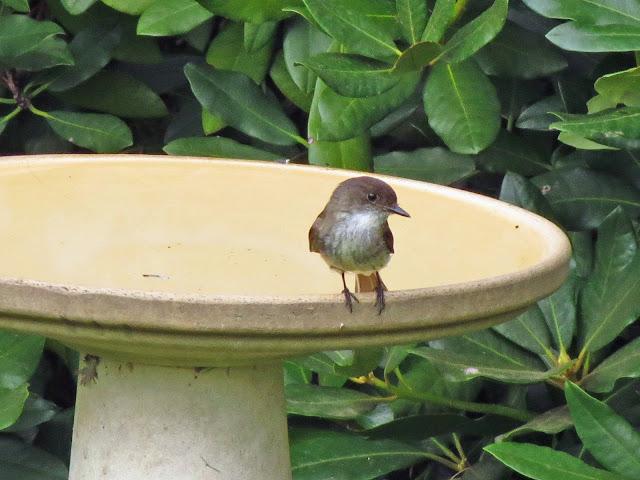 phoebe relaxing on bath edge