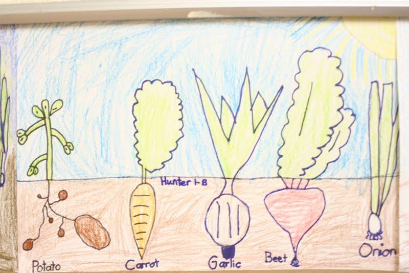 Nortons Young Artists: 1st Grade gardens