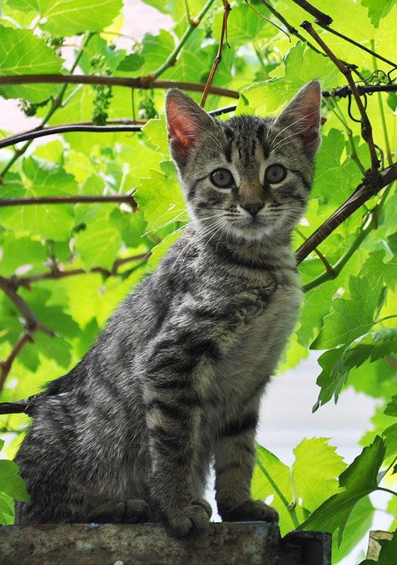Brasovul lor: Donez spre adoptie pui de pisica in varsta ...