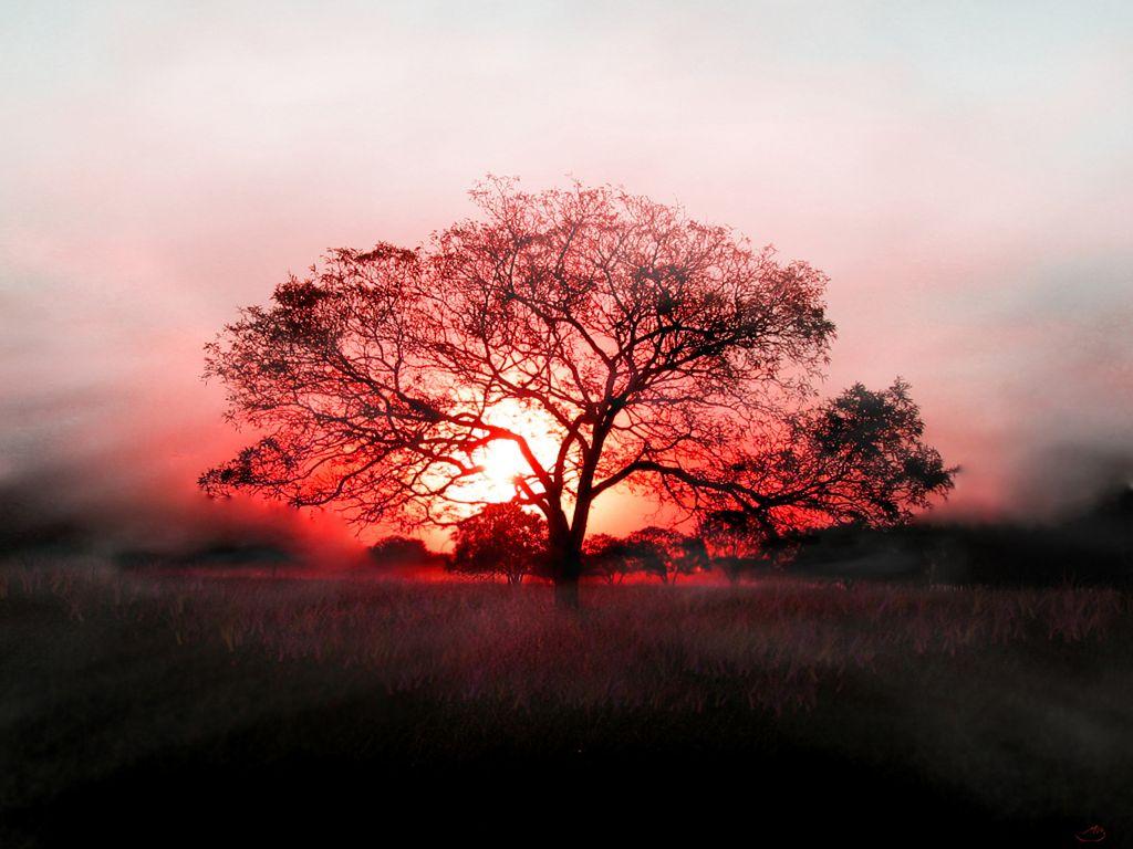 http://4.bp.blogspot.com/-rItuwWcSbqg/TZxowk-wzTI/AAAAAAAADtU/KqaYdBpgtyY/s1600/sunset+red_1024x768.jpg