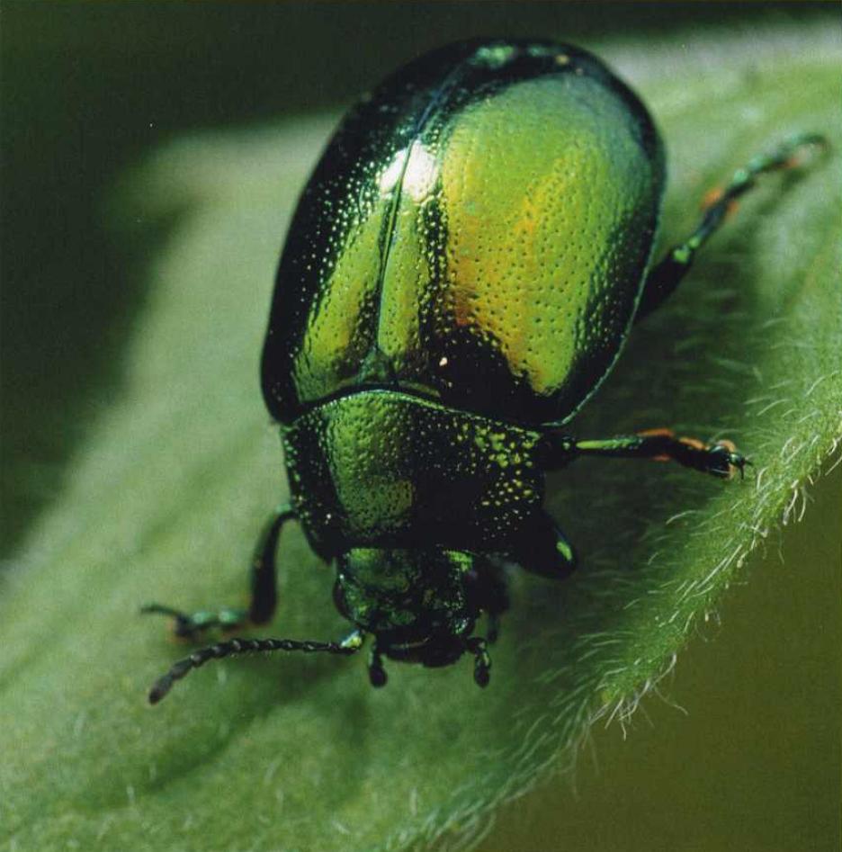T cnicas de fotografia for Insectos del jardin