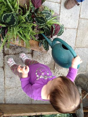 baby bear hugs planting tutorial planterra