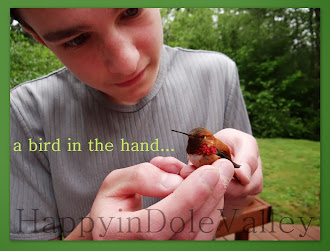 our hummingbird story...