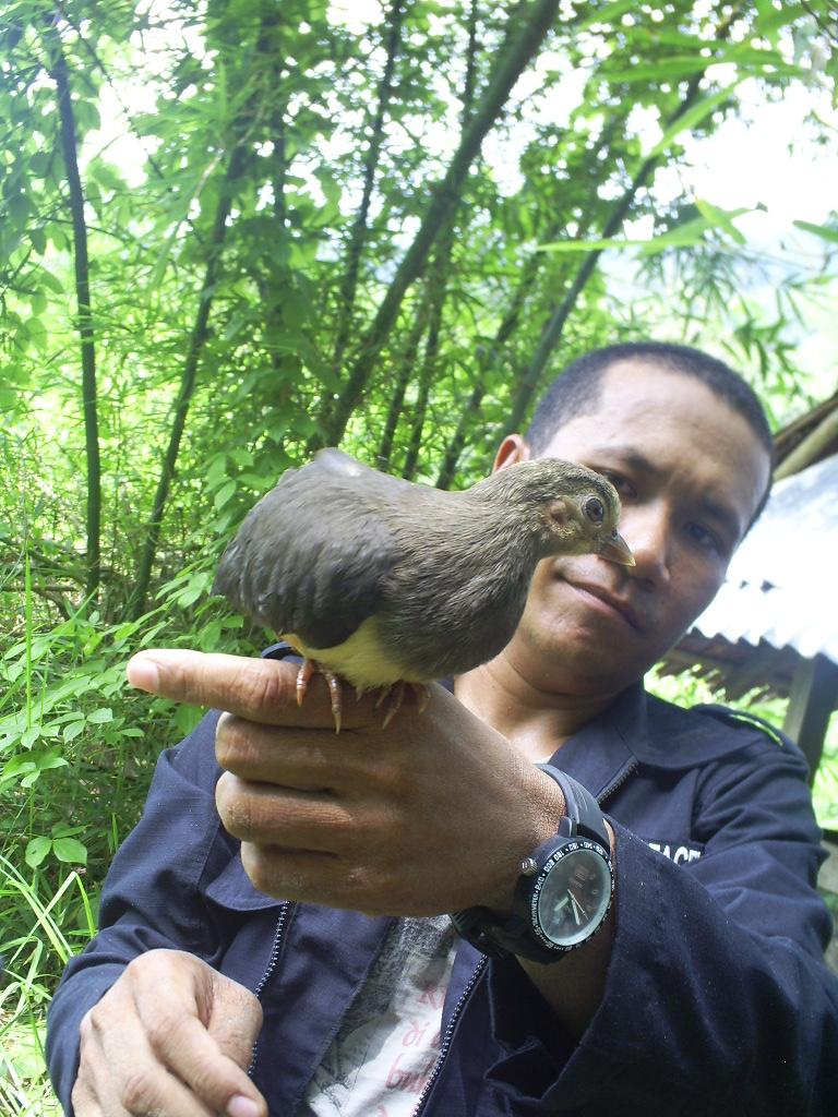 Intip Kelahiran  Burung Maleo