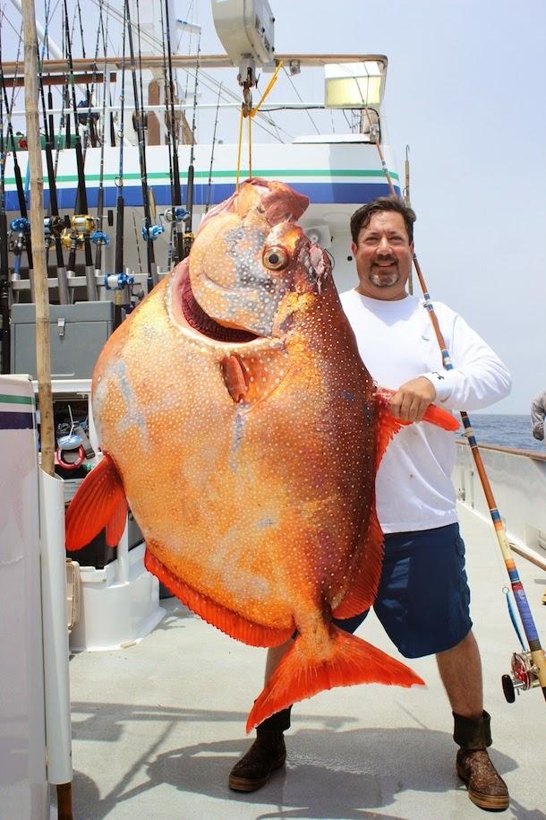 Big fish games patcher 2014 world