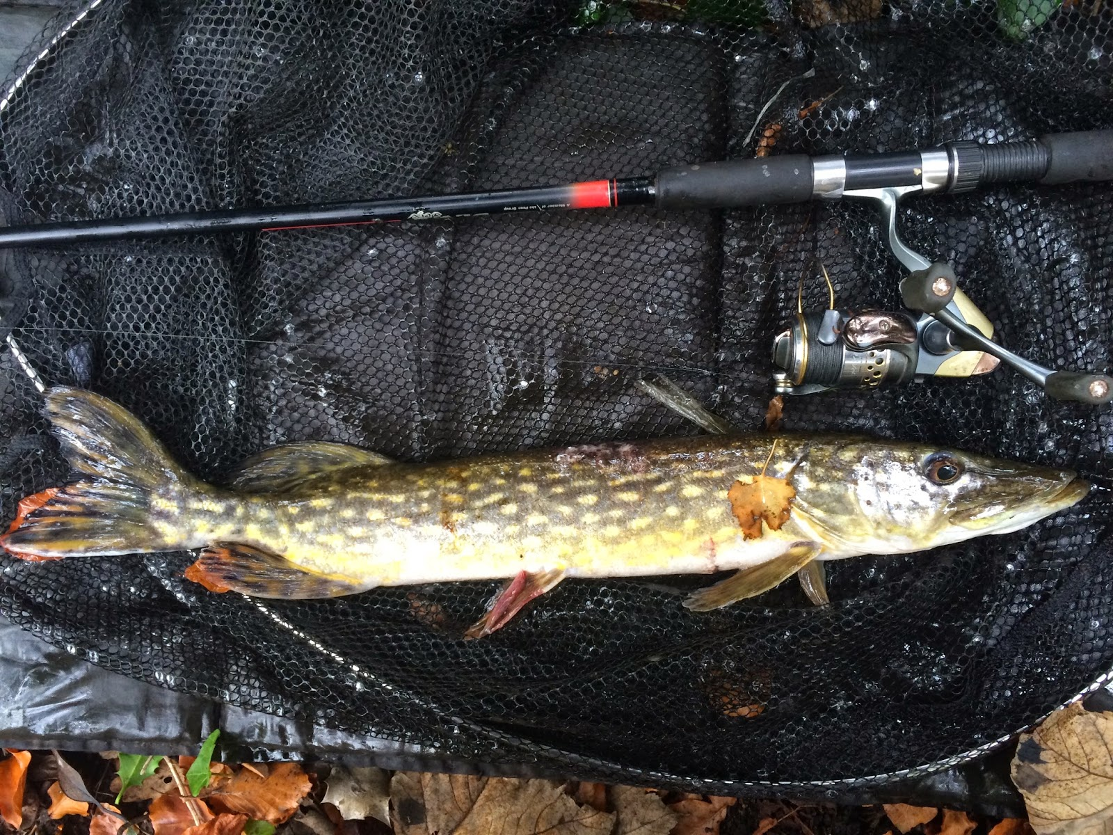 Danny 39 s angling blog deadbaiting for pike and what pike for Fishing for pike