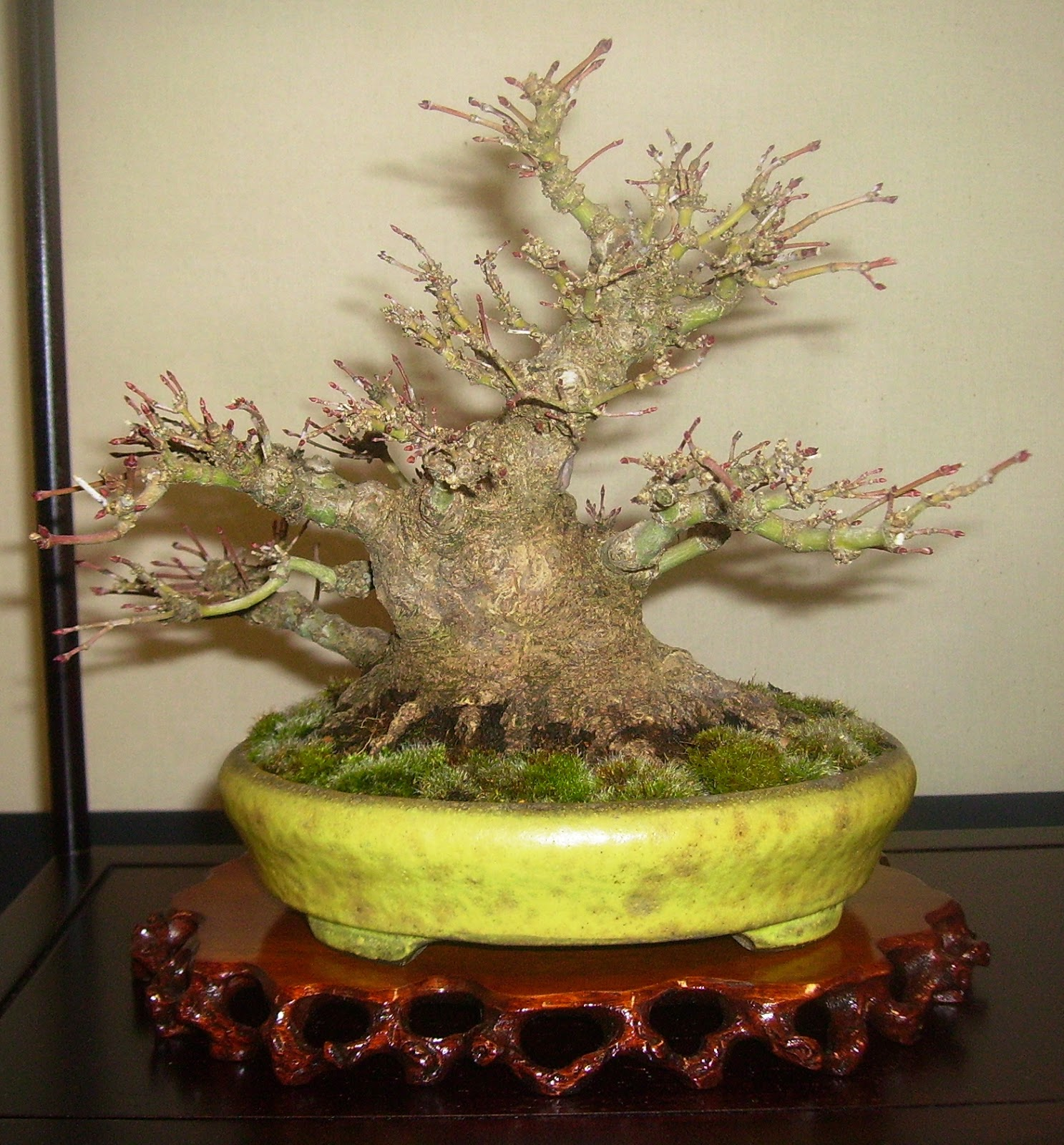 Bespoke Bonsai Stands March 2013