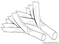 Gambar Mewarnai Bumbu Dapur Daun Bawang
