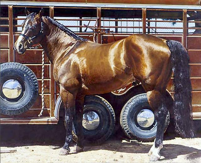 cuadros-de-caballos-famosos