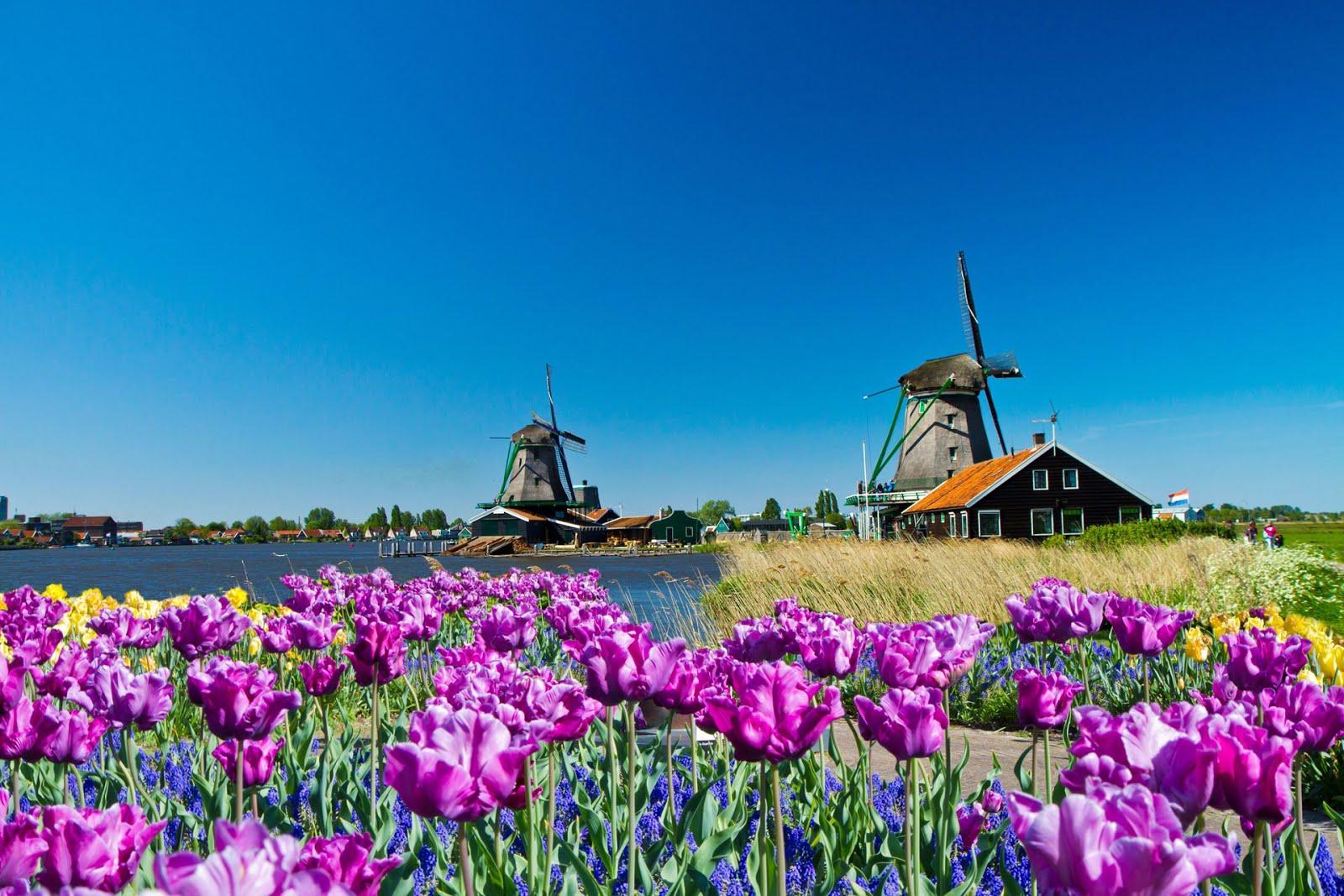 http://4.bp.blogspot.com/-rLGIvWmx14Y/UOO2PvzQxaI/AAAAAAABbH4/l4kDqqhxIC8/s1600/molinos-de-viento-en-un-paisaje-muy-hermoso-junto-al-lago-y-flores-de-