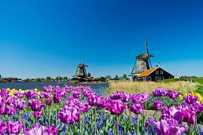 Molinos de Viento junto al lago y flores de tulipanes