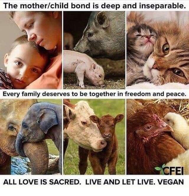 Love..Freedom..Peace = Vegan
