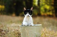 Cat in the Pot 2