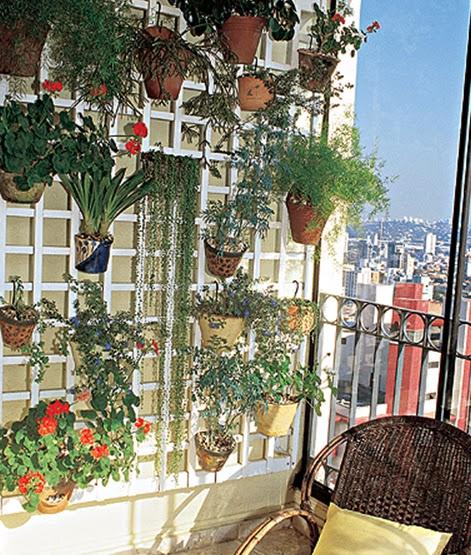 trelica jardim vertical:Uma coleção de vazinhos com tipos e espécies diferentes de planta