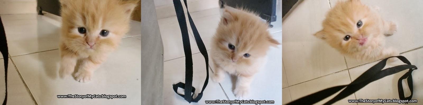 kucing umur 1 bulan