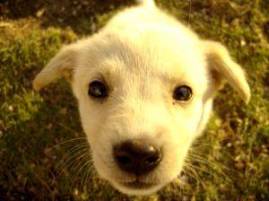 entrenar cachorro a hacer necesidades afuera de la casa