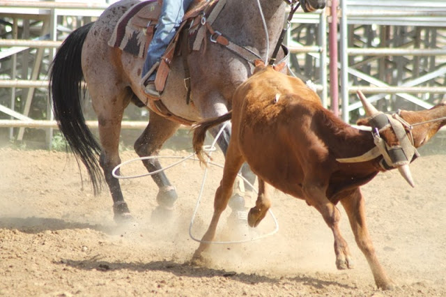 team roping at the Sheridan Elk's Youth Rodeo