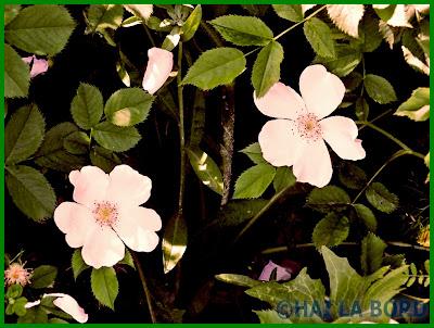 floricele parcul lumea copiilor bucuresti