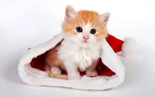 Gambar Wallpaper Kucing Lucu Banget 20005