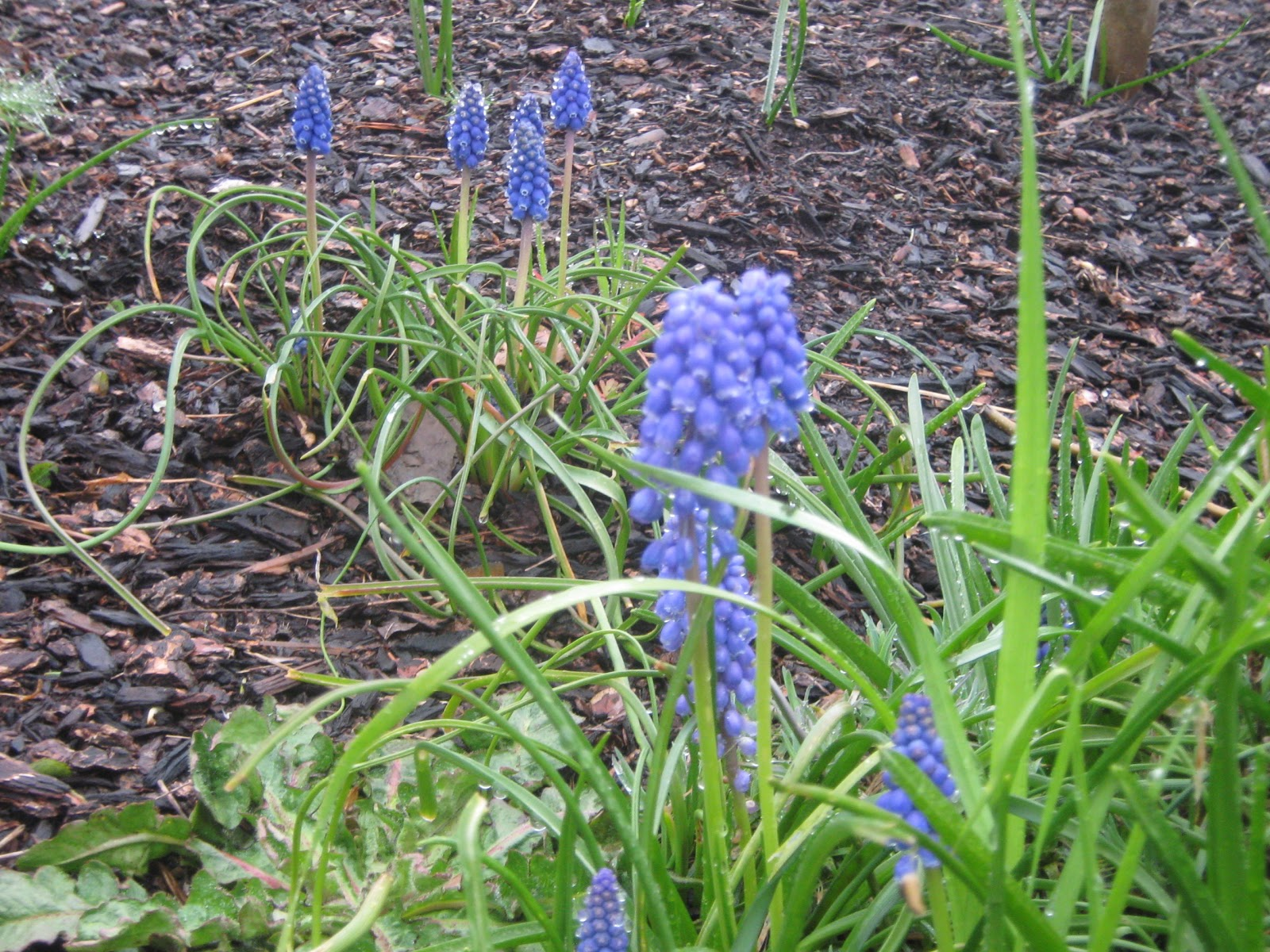 how to get rid of purple flower weeds