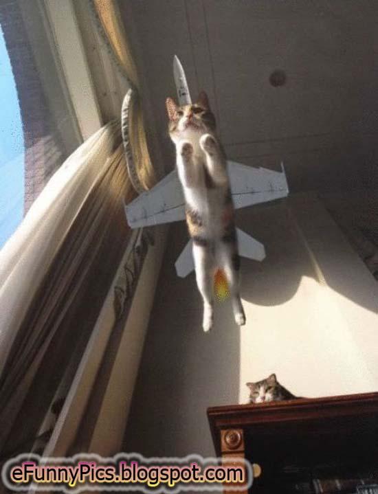 Aviator Cat