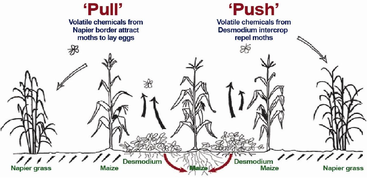 Stages of a Pea Plant Life Cycle  Hunker