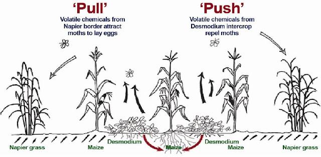 push–pull technology