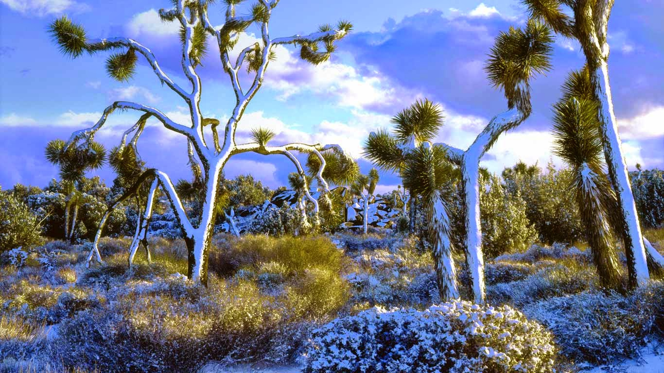 Snow-covered Joshua trees, Joshua Tree National Park, California (© Christopher Talbot Frank/Danita Delimont) 540