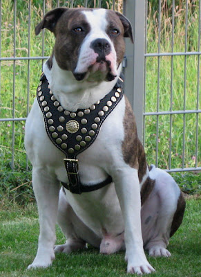 Bulldogs and Terriers were developed in the British Isles. Both breeds became increasingly popular around the start of the 16th century when hunting was a major form of entertainment.