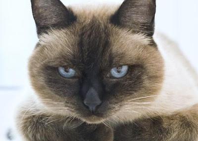 Кошачьи странности