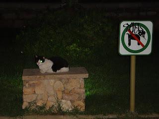 Gato descansado - Proibido cães