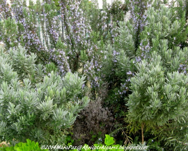 Lavender and rosemary