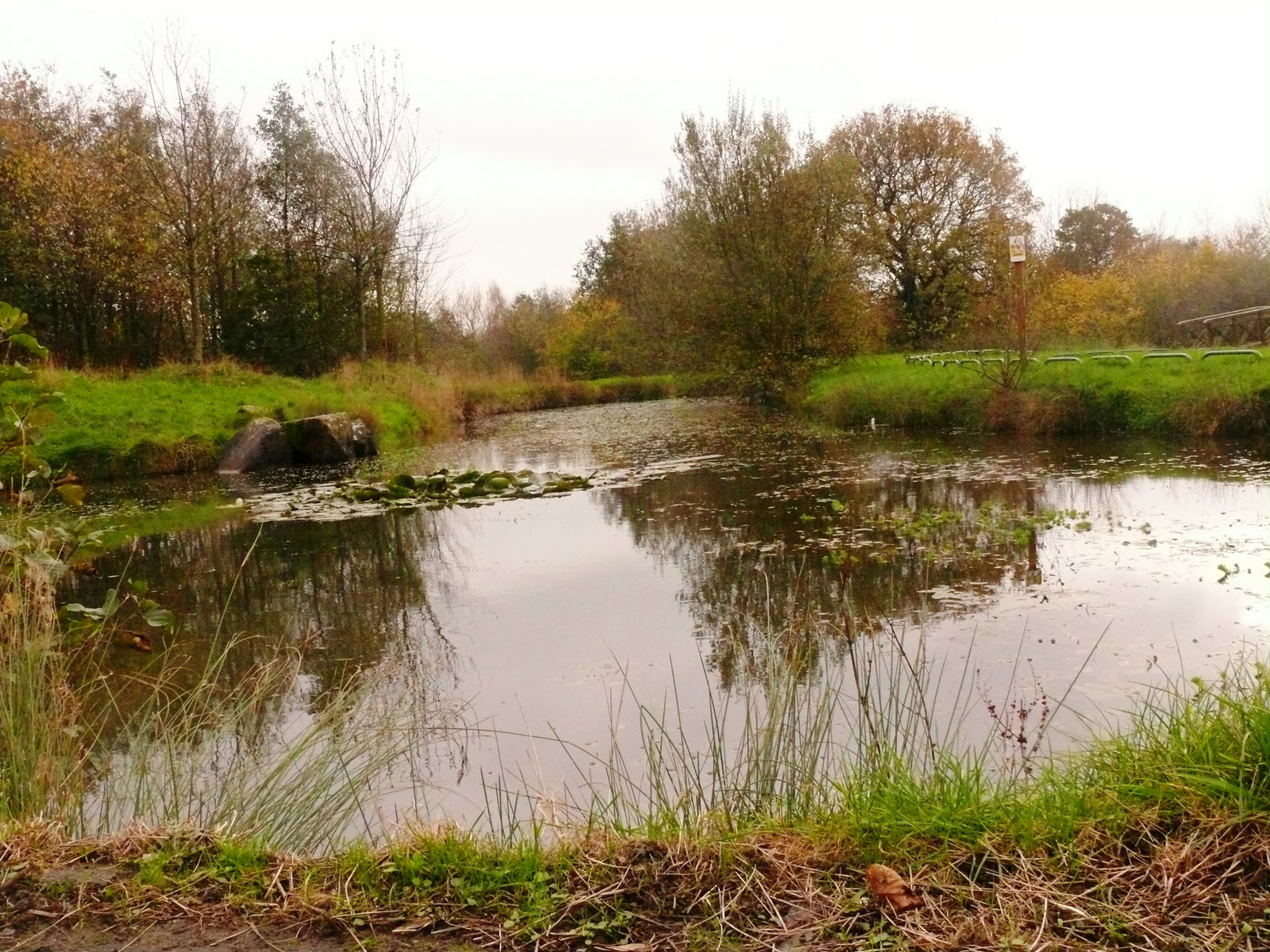 Cottam Conservation What A Network Of Ponds