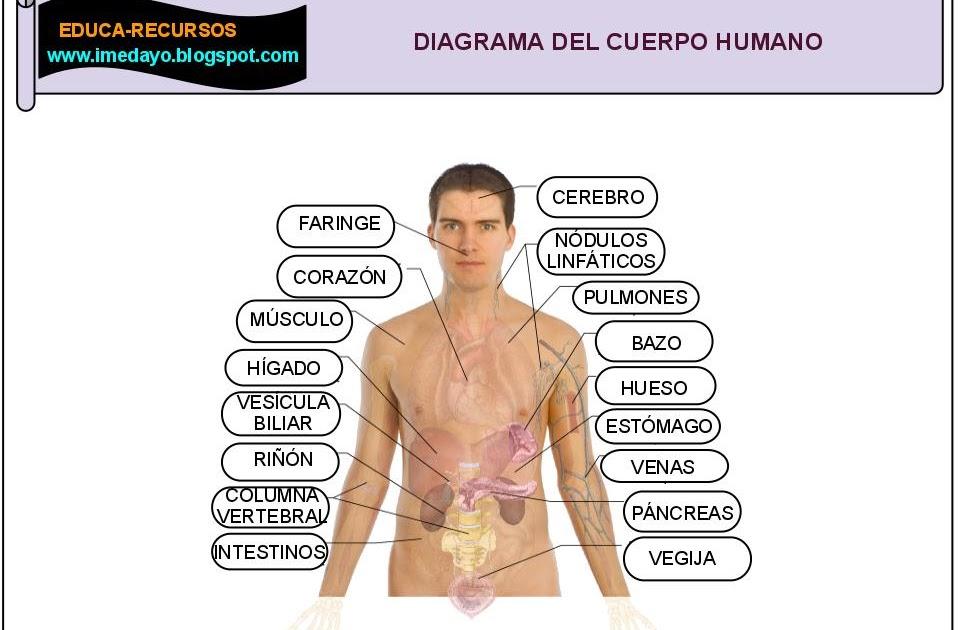 Educa recursos diagrama del cuerpo humano for Medidas ergonomicas del cuerpo humano