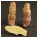 pink fir apple new potatoes