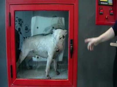 Lava tu perro en el Lavakan