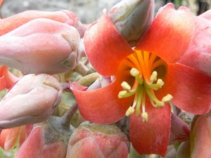Pretty Orange Beach Flower by Mia Judkins
