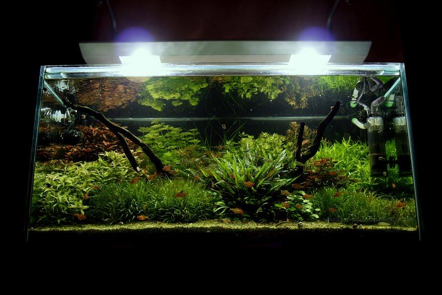 Dutch Planted Aquarium Aquascape Ideas