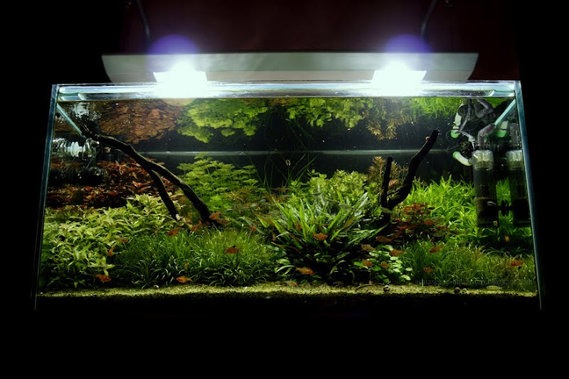 Dutch Planted Aquarium Aquascape Ideas