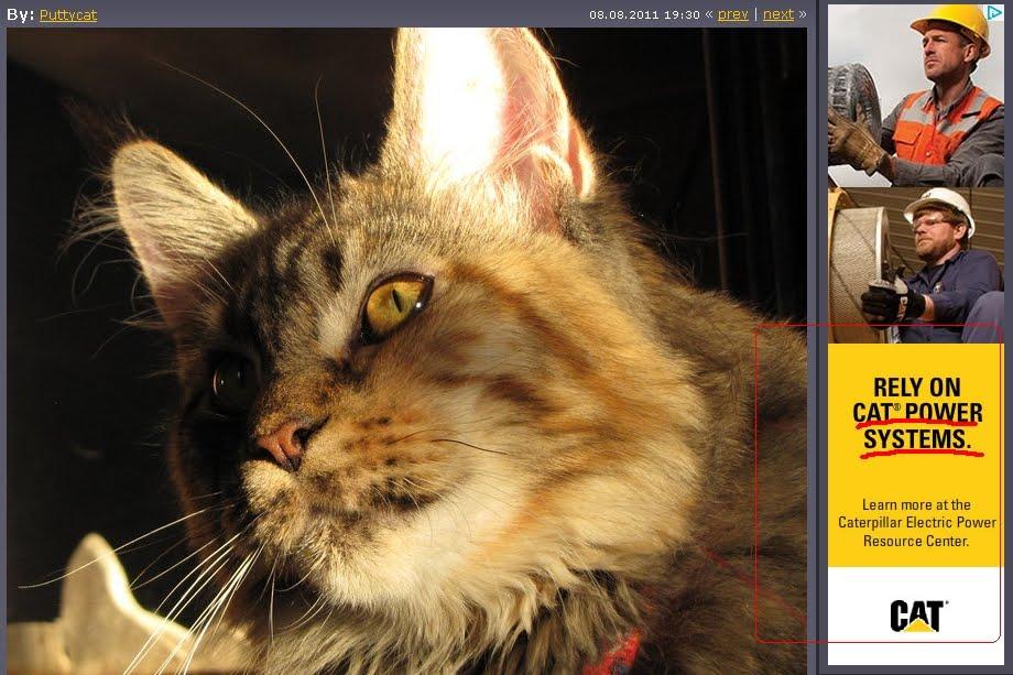 реклама CAT в интернете