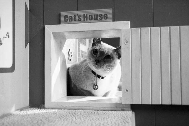 M s consejos para prevenir la alergia al gato en adultos - El gato en casa ...