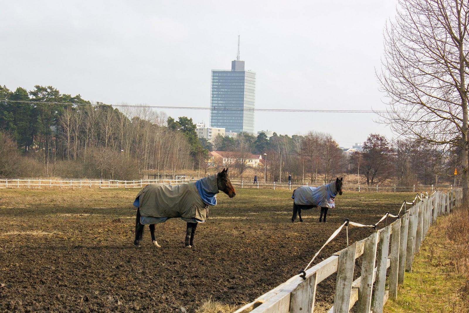 Стокгольм Kista конюшни