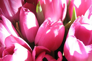 Tulips, by Vera Kratochvil