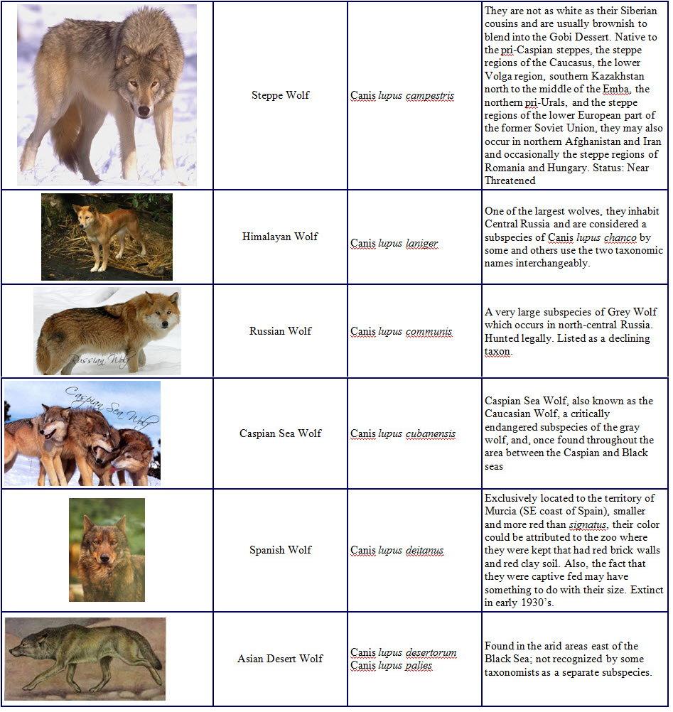Species and Subspecies Sp005