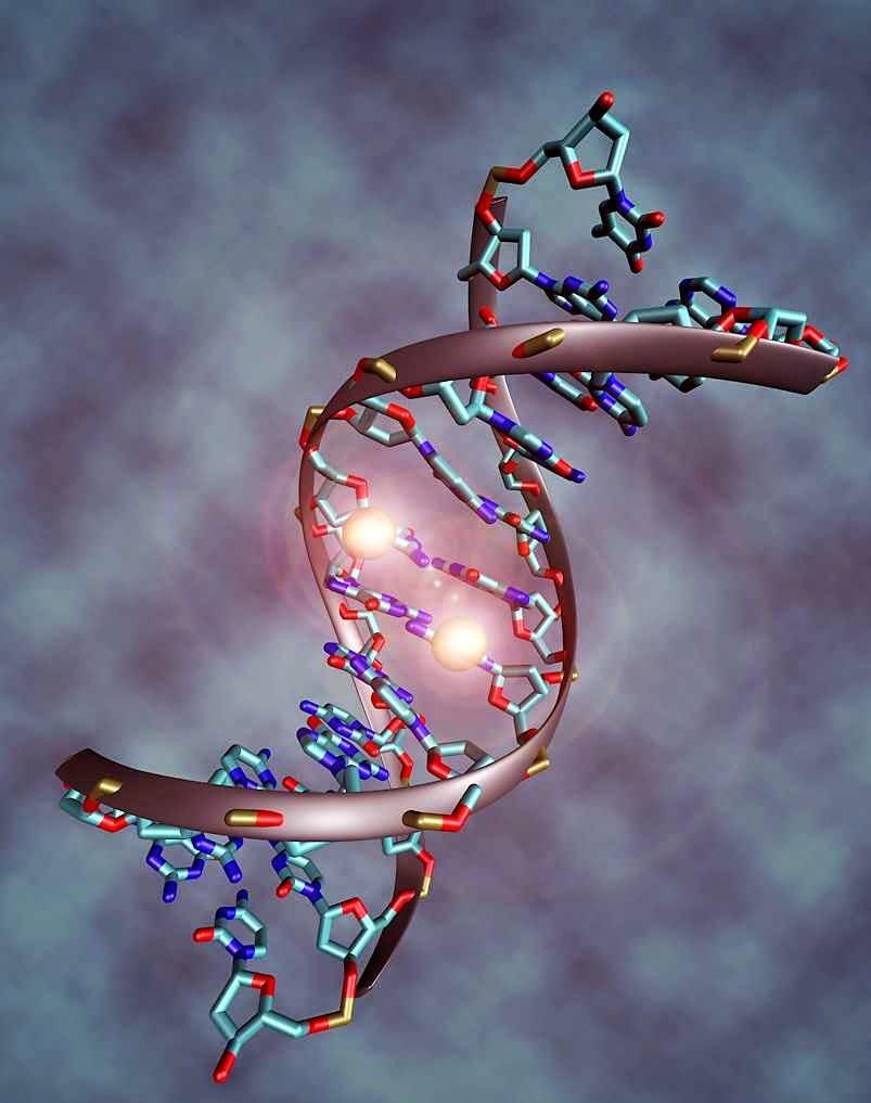 A fabulosa complexidade do código genéticco fala de um Deus supremo  Criador da vida e de tudo quanto existe.