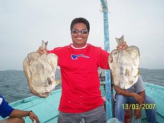 Ikan Telinga Gajah