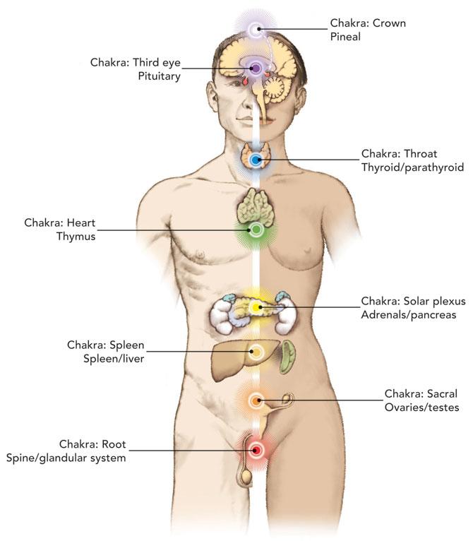 Alchemyegg Aumniverse Alchemy Egg Am Universe Thyroid