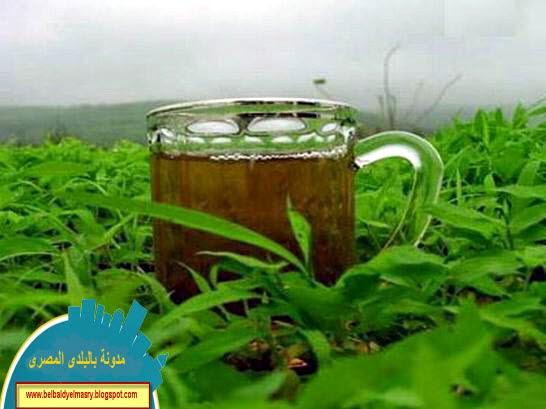تعرف على فوائد الشاى الاخضر واهميته الهائله فى علاج  الامراض والوقايه من السرطانات