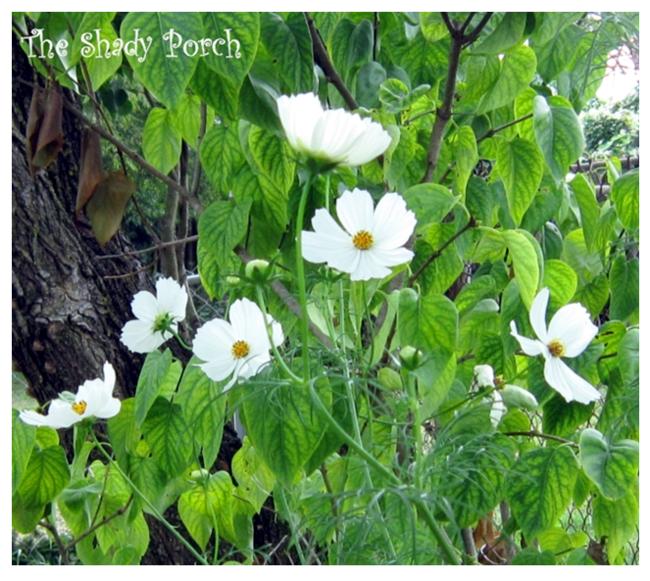 #various #blooms #annuals #perennials #flowers #garden #kentucky