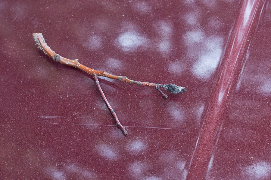 twig on red car
